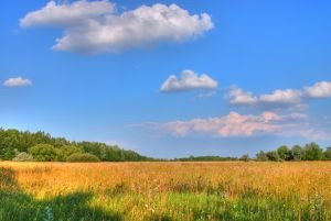 1134972_wheat_field.jpg